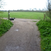 Leamington Spa dog walk, Warwickshire - Dog walks in Warwickshire