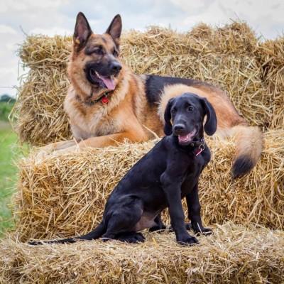 Olli&Loki - Driving with Dogs