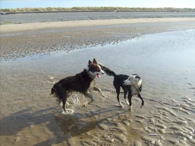 Prestatyn dog-friendly beach, Wales - Driving with Dogs
