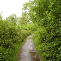 M5 Junction 18 and 19 woodland dog walk, Somerset - Dog walks in Somerset