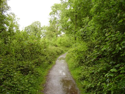 M5 Junction 18 and 19 woodland dog walk, Somerset - Driving with Dogs