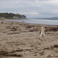Nairn dog-friendly beach in winter, Scotland - Dog walks in Scotland