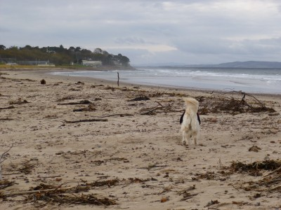 Nairn dog-friendly beach in winter, Scotland - Driving with Dogs