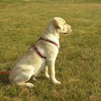 Positive 4 Paws, Hampshire - Image 4