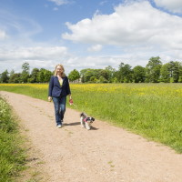 A38 Croome Park dog walks, Worcestershire - Dog walks in Worcestershire