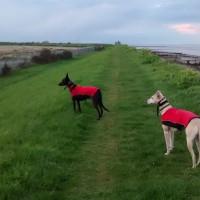 Cockle shell dog-friendly beach, Kent - Dog walks in Kent