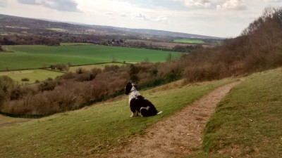 Dog walking group in South East London/Kent, Kent - Driving with Dogs