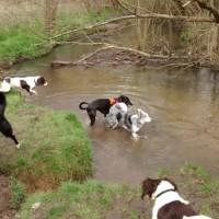 Dog walking group in South East London/Kent, Kent - Dog walks in Kent
