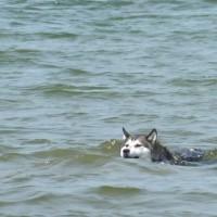 Rhosneigr dog-friendly beach, Anglesey, Wales - Dog walks in Wales