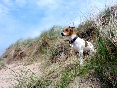 Formby dog-friendly beach near Liverpool, Lancashire - Driving with Dogs