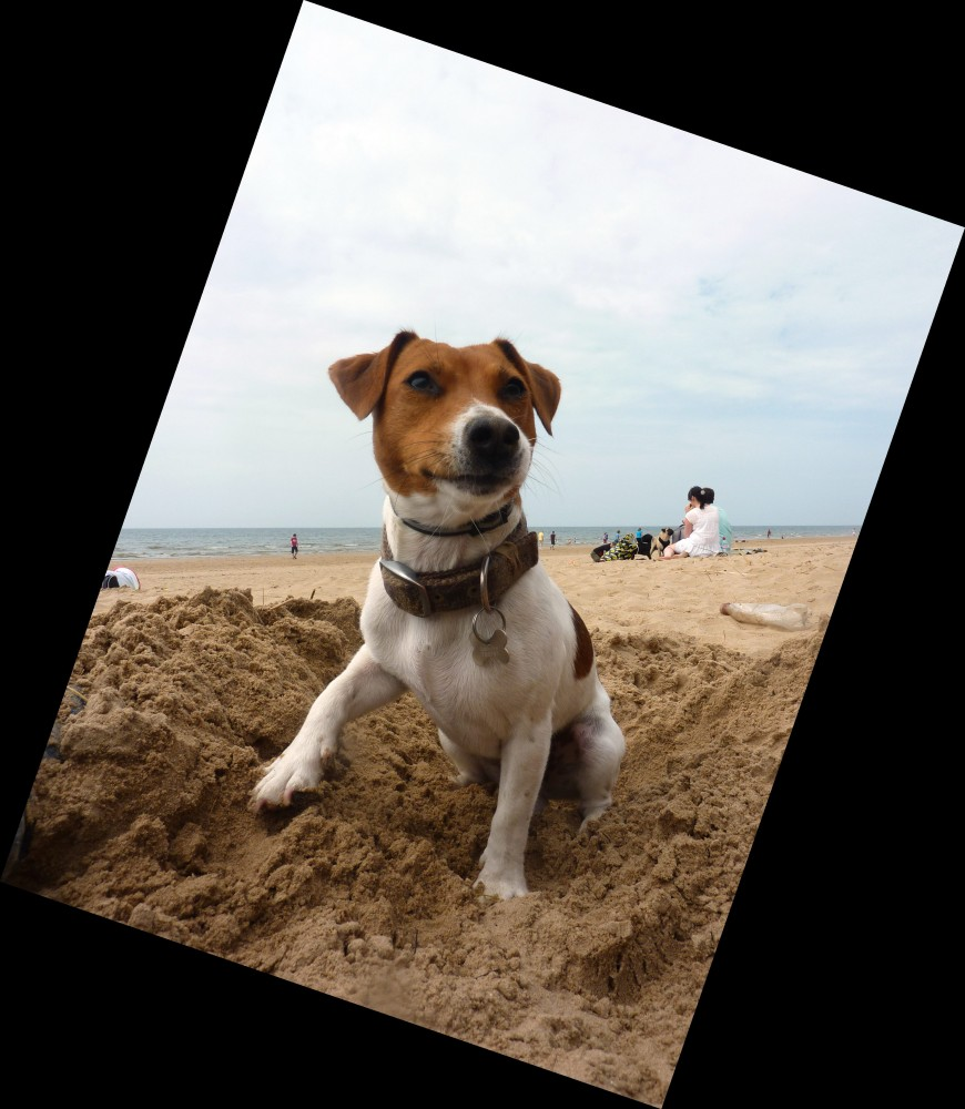 Formby dog-friendly beach near Liverpool, Lancashire - Dog walks in Lancashire