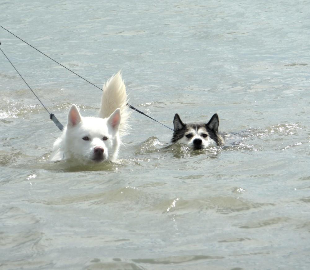 Oxwich dog-friendly Beach, Gower Peninsula, Wales - Dog walks in Wales