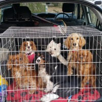 SWAT Pets boarding and day care, Gloucestershire - Image 3