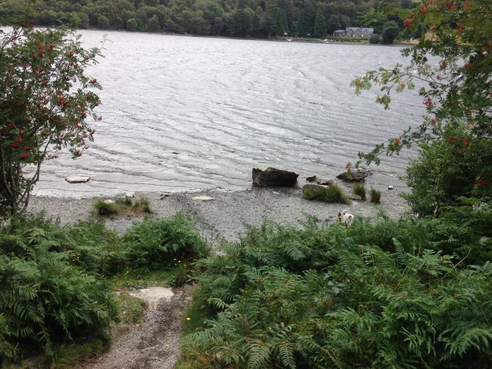 Crafnant dog walk, Clwyd, Wales - Dog walks in Wales