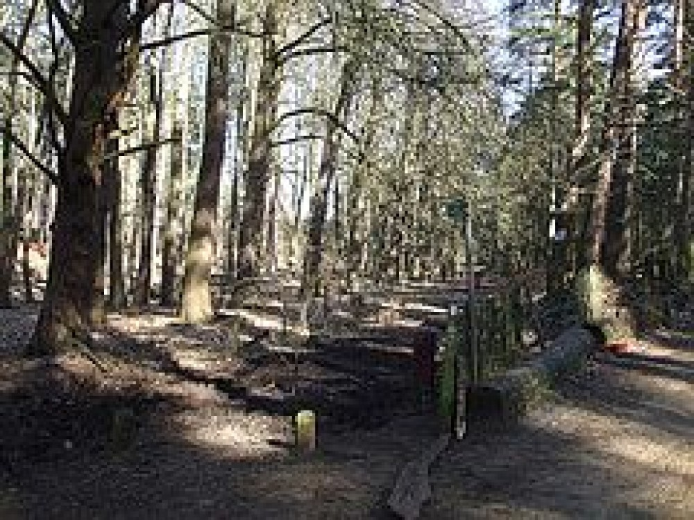 Aspley Woods dog walk, Bedfordshire - Dog walks in Bedfordshire