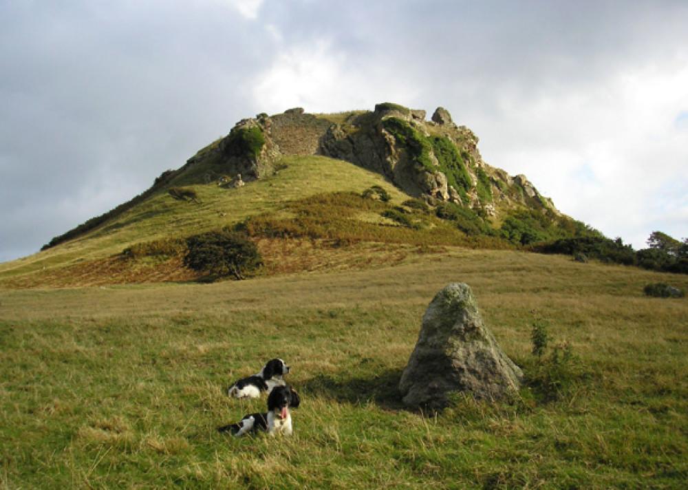 A55 dog walk near Conwy, Clwyd, Wales - Dog walks in Wales
