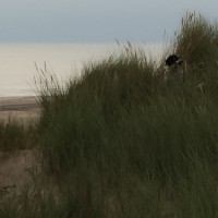 Formby Woods, Merseyside - Dog walks in Merseyside