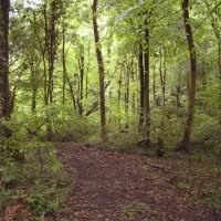 M5 Junction 18 and 19 woodland dog walk, Somerset - Dog walks in Somerset