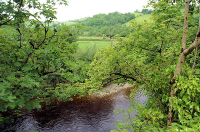 A38 dog walk and dog-friendly inn on the River Dart, Devon - Driving with Dogs