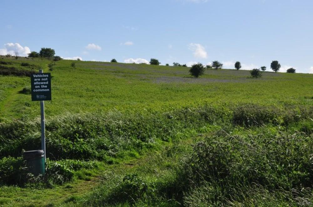 A38 dog walk near Felton, Somerset - Dog walks in Somerset