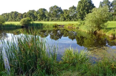 A38 dog walk and dog-friendly cafe near Taunton, Somerset - Driving with Dogs