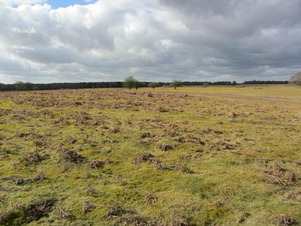 Heathland dog walk near Thetford, Norfolk - Dog walks in Norfolk