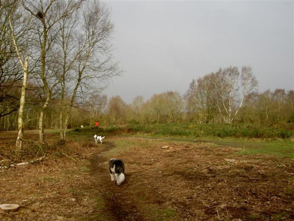 Mousehold Heath dog walks, Norwich, Norfolk - Dog walks in Norfolk