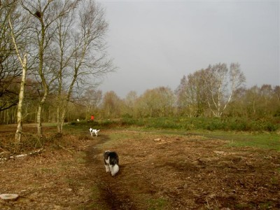 Mousehold Heath dog walks, Norwich, Norfolk - Driving with Dogs
