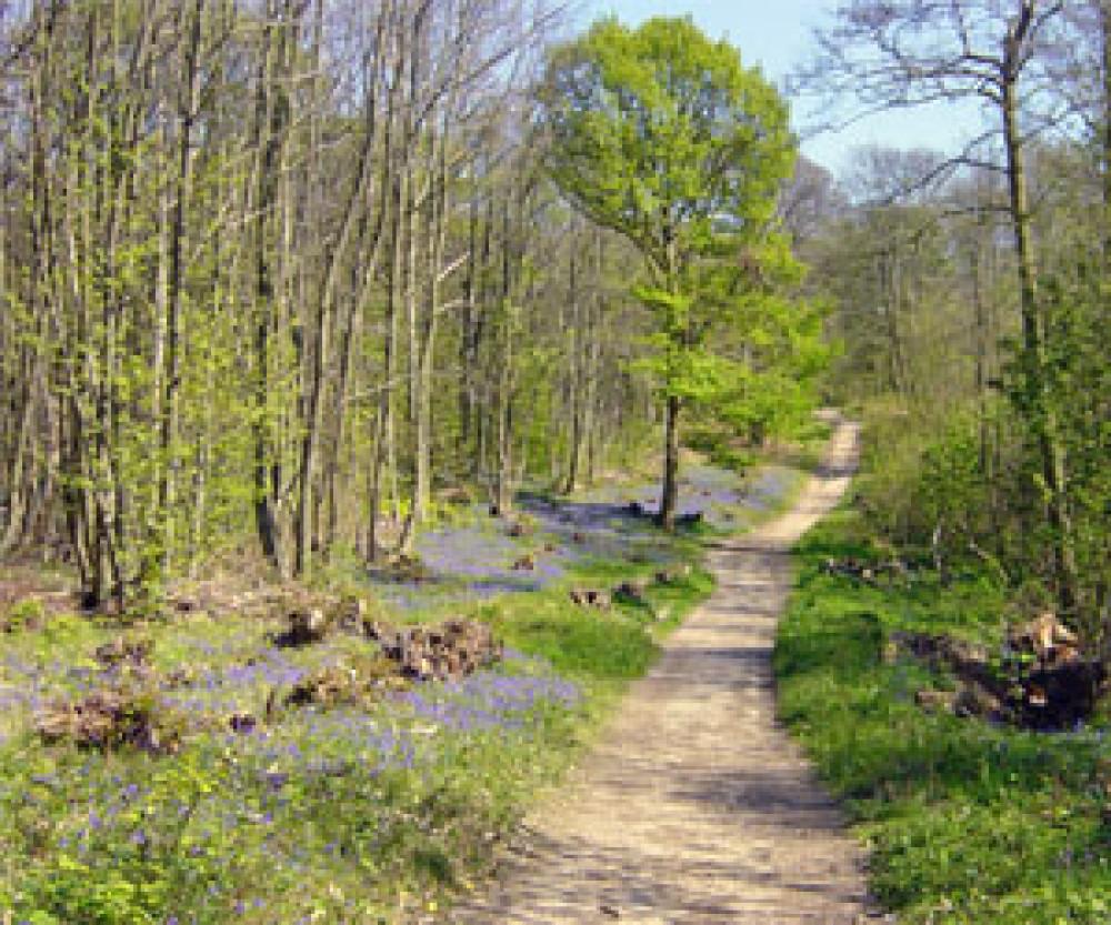 Norsey Woods dog walk near Billericay, Essex - Dog walks in Essex