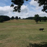 Cofton Park local dog walk, West Midlands - Dog walks in the West Midlands