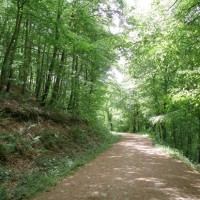 A38 Woodland dog walk, Somerset