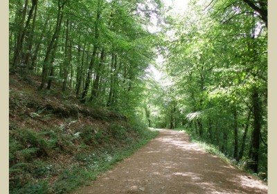 A38 Woodland dog walk, Somerset - Driving with Dogs