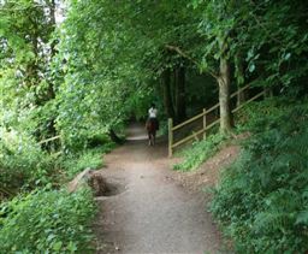 A38 Woodland dog walk, Somerset - Dog walks in Somerset