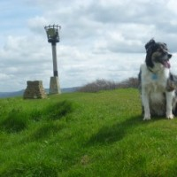 A38 dog walk south of Gloucester, Gloucestershire - Dog walks in Gloucestershire