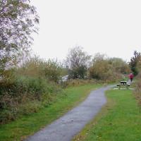 A38 dog-friendly pub and dog walk, Staffordshire - Dog walks in Staffordshire