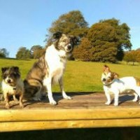 A38 dog walk and cafe near Bodmin, Cornwall - Dog walks in Cornwall