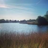 Lakeside dog walk to a dog-friendly inn, Wiltshire - Wiltshire dog walk and dog-friendly pub