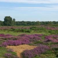 Blaxhall Common dog walk, Suffolk - Dog walks in Suffolk