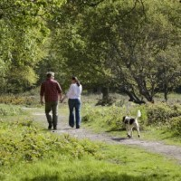 A414 Huge open space for dog walking and a dog-friendly pub too, Essex - Dog walks in Essex