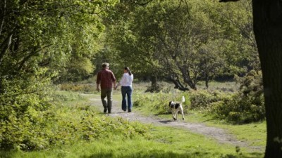 A414 Danbury Common and Blakes Wood dog walk, Essex - Driving with Dogs