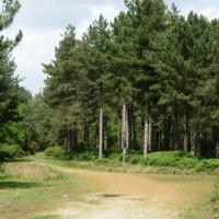 Dunwich Forest dog walk, Suffolk