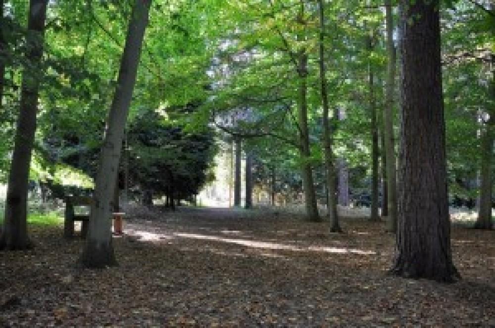 A12 doggie stop in the Forest, Suffolk - Dog walks in Suffolk
