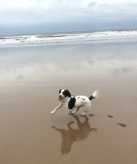 Roker dog-friendly beach and dog cafe, Sunderland - Image 3