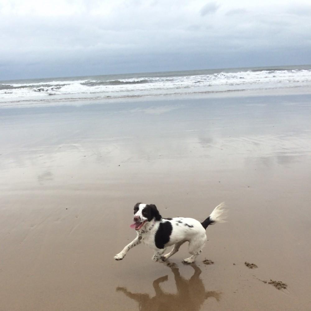 Roker dog-friendly beach and dog cafe, Sunderland - Image 3