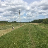 Coatham wood dog walk in dog-friendly, County Durham - Dog walks in County Durham