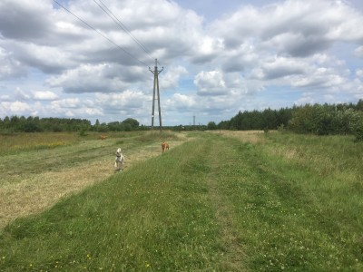 Coatham wood dog walk in dog-friendly, County Durham - Driving with Dogs