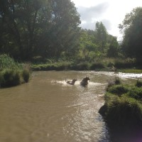 Coatham wood dog walk in dog-friendly, County Durham - Dog walks in County Durham