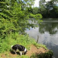 Dedham dog walks, Essex - Dog walks in Essex