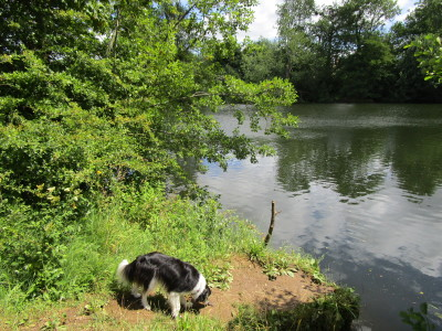 Dedham dog walks, Essex - Driving with Dogs