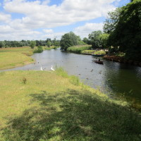 Dedham dog walks, Essex - Dog walks in Essex